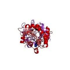 Структура синтазы CMP-сиаловой кислоты; NmCSS CAS 9067-82-7 EC 2.7.7.43