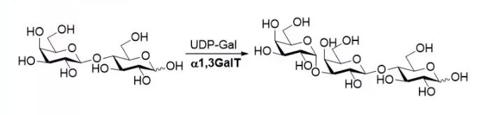 alfa1, 3-galactosiltransferasa; alpha1, 3GalT CAS 62213-42-7 EC 2.4.1.87