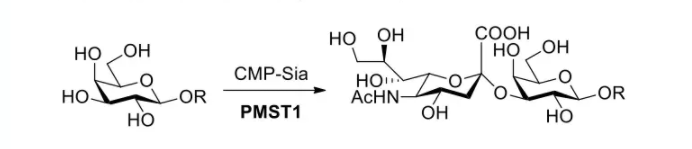 alpha2, 3-sialyltransferase; PmST1 CAS 71124-51-1 EC 2.4.99.4
