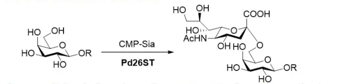 alpha2,6-sialyltransferase; Pd26ST CAS 9075-81-4 EC 2.4.99.1