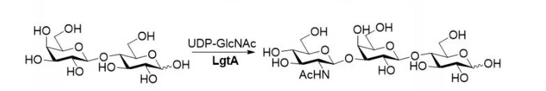 베타 1-N- 아세틸 헥사 미닐 트랜스퍼 라제; LgtA CAS 3-37277-64 EC 8