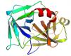 Structure of Recombinant Enterokinase EC 3.4.21.9 CAS 9017-74-8