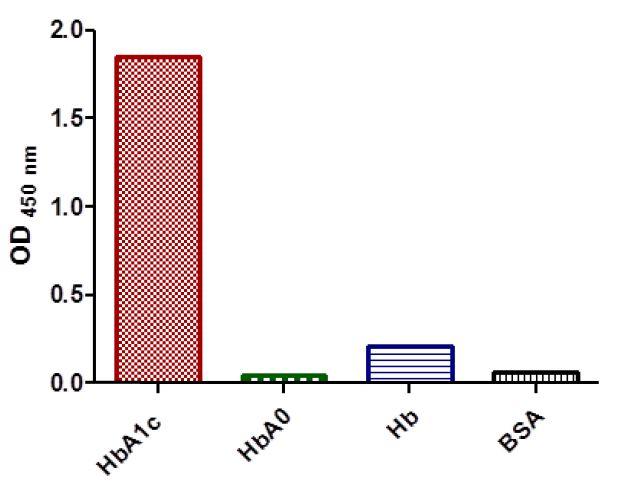 Anticuerpo anti-HbA1c (hemoglobina CAS 9008-02-0 A1c) en ELISA2