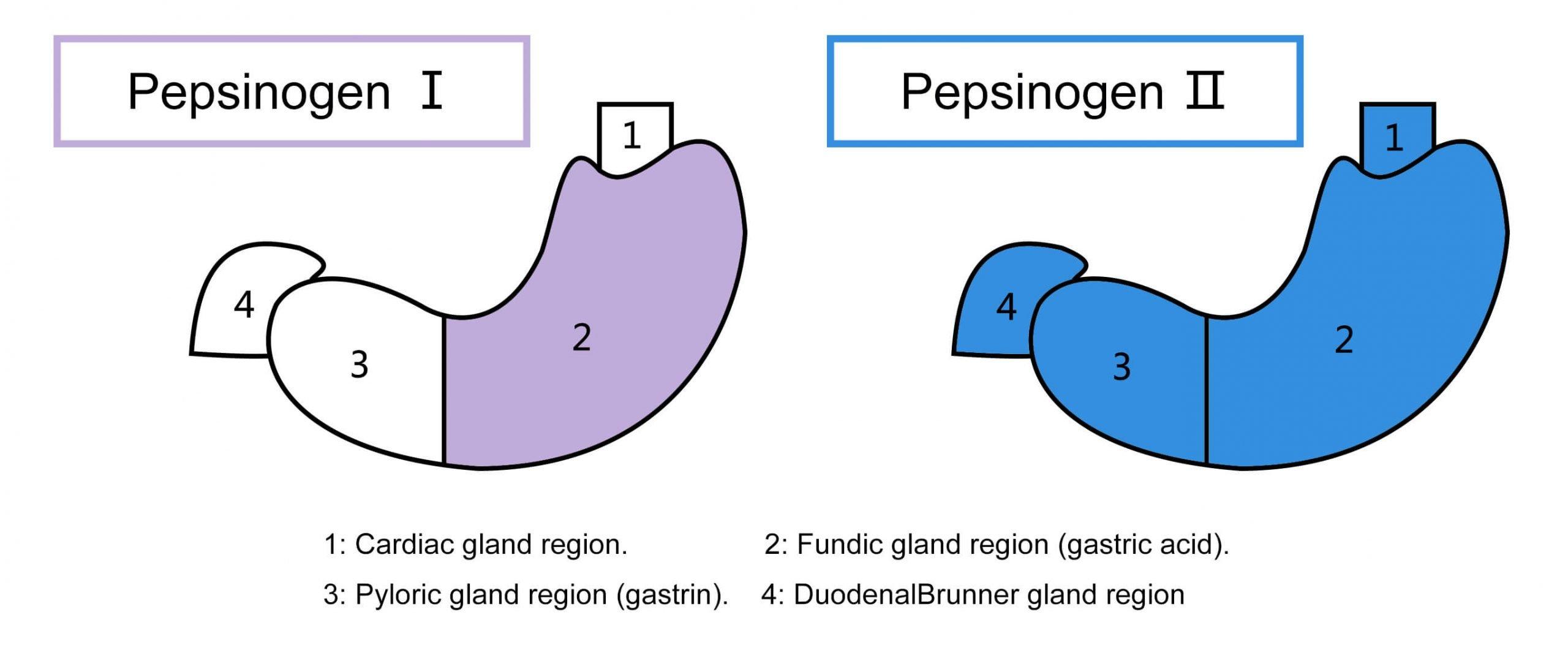 пепсиноген1