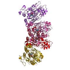 ホスホノ酢酸加水分解酵素の構造例EC#:3.11.1.2
